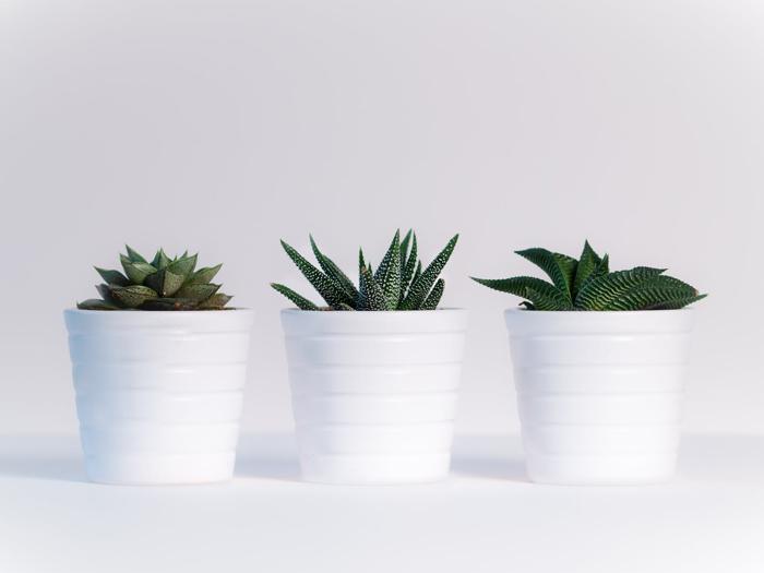 Sukkulenten sind pflegeleichte Pflanzen